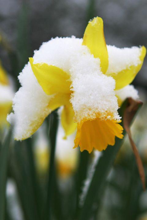 Petal, Yellow, Flower, White, Botany, Flowering plant, Spring, Close-up, Plant stem, Wildflower,