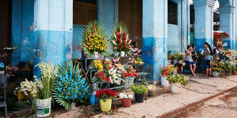 Flowerpot, Plant, Flower, Majorelle blue, Floristry, Interior design, Houseplant, Flower Arranging, Annual plant, Floral design,