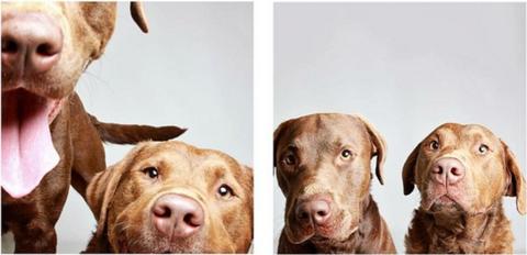 Brown, Organism, Skin, Vertebrate, Dog, Dog breed, Carnivore, Jaw, Snout, Iris,