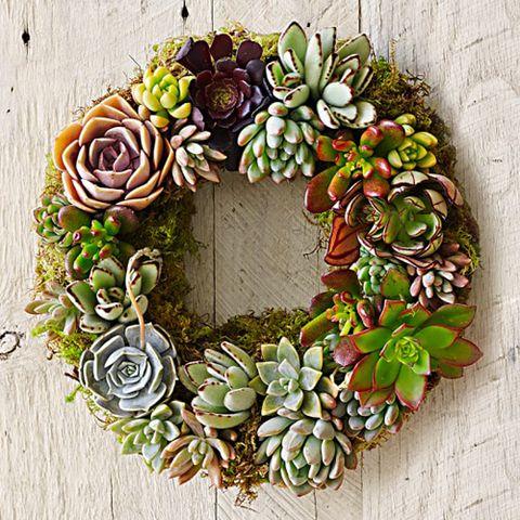 williams sonoma mixed succulent wreath