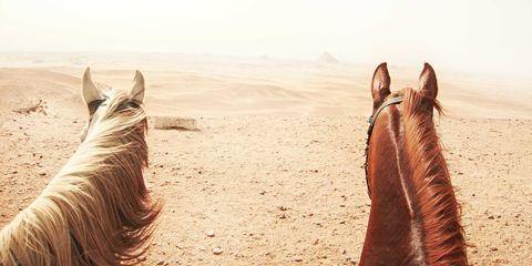 Brown, Landscape, Horse, Sorrel, Ecoregion, Liver, Mane, Working animal, Livestock, Stallion,