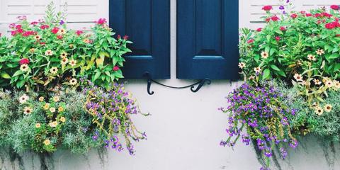 Flower, Petal, Shrub, Purple, Door, Magenta, Violet, Lavender, Fixture, House,