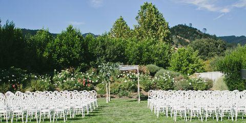 Shrub, Garden, Groundcover, Plantation, Landscaping, Yard, Decoration,