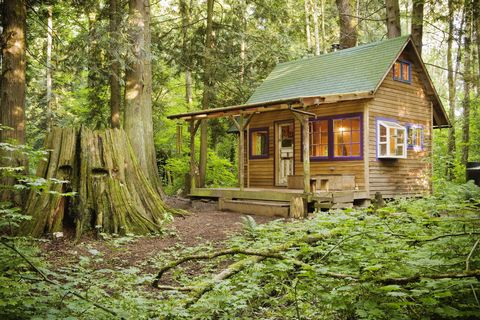 Wood, Natural environment, Window, Tree, Forest, House, Log cabin, Woody plant, Rural area, Woodland,