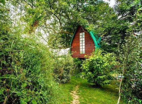 Vegetation, Wood, Plant community, Leaf, Nature reserve, Shrub, Rural area, Biome, Forest, Jungle,