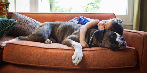 Dog breed, Comfort, Carnivore, Dog, Companion dog, Sleep, Liver, Fawn, Living room, Nap,