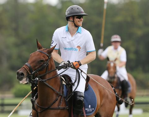 Halter, Bridle, Helmet, Rein, Sports gear, Horse supplies, Vertebrate, Personal protective equipment, Horse tack, Horse,