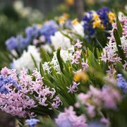 Flower, Purple, Lavender, Flowering plant, Botany, Spring, Wildflower, Groundcover, Herbaceous plant, Subshrub,