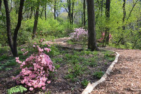 Plant, Shrub, Flower, Plant community, Petal, Garden, Soil, Woody plant, Groundcover, Forest,