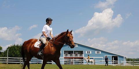 Horse, Halter, Bridle, Equestrianism, Rein, Animal sports, Mammal, Vertebrate, Horse supplies, Horse tack,