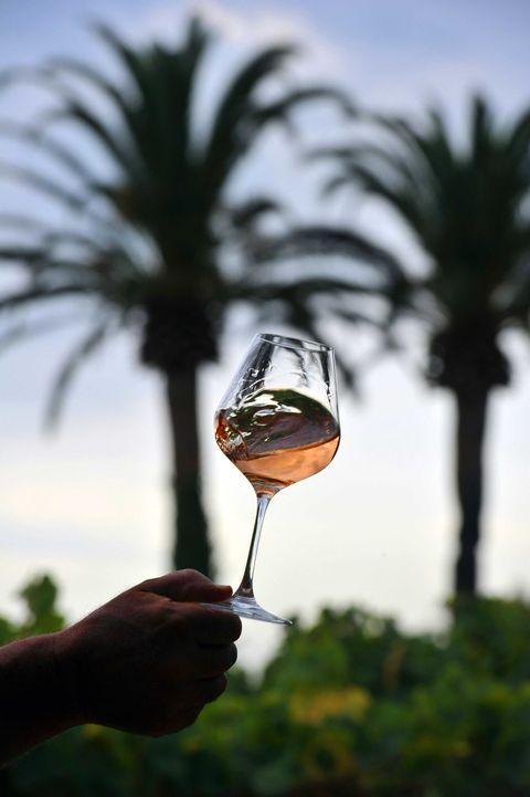 Liquid, Fluid, Glass, Drinkware, Drink, Stemware, Alcoholic beverage, Alcohol, Barware, Dessert wine,