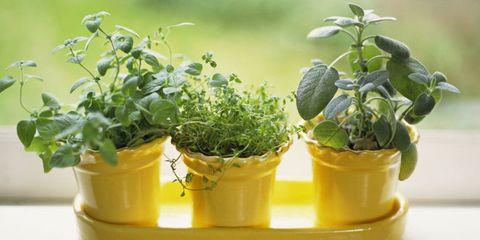 Flowerpot, Houseplant, Annual plant, Herb, Plant stem,