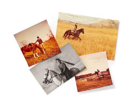 Human, Vertebrate, Horse, Sorrel, Horse supplies, Liver, Horse tack, Bridle, Rein, Paper product,