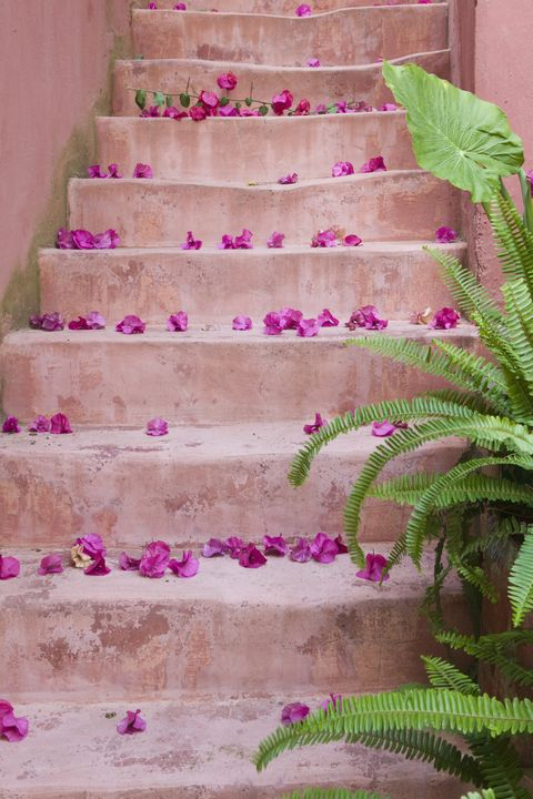 Spring Flowers On Staircase Chania Crete Greece