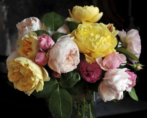 Petal, Yellow, Flower, Pink, Flowering plant, Rose family, Rose order, Garden roses, Bouquet, Rose,