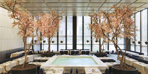 Branch, Interior design, Property, Room, Ceiling, Twig, Interior design, Real estate, Light fixture, Ceiling fixture,