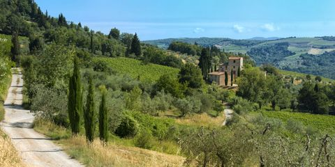 Vegetation, Natural landscape, Highland, Tree, Hill, Rural area, Road, Mountain, Landscape, Thoroughfare,