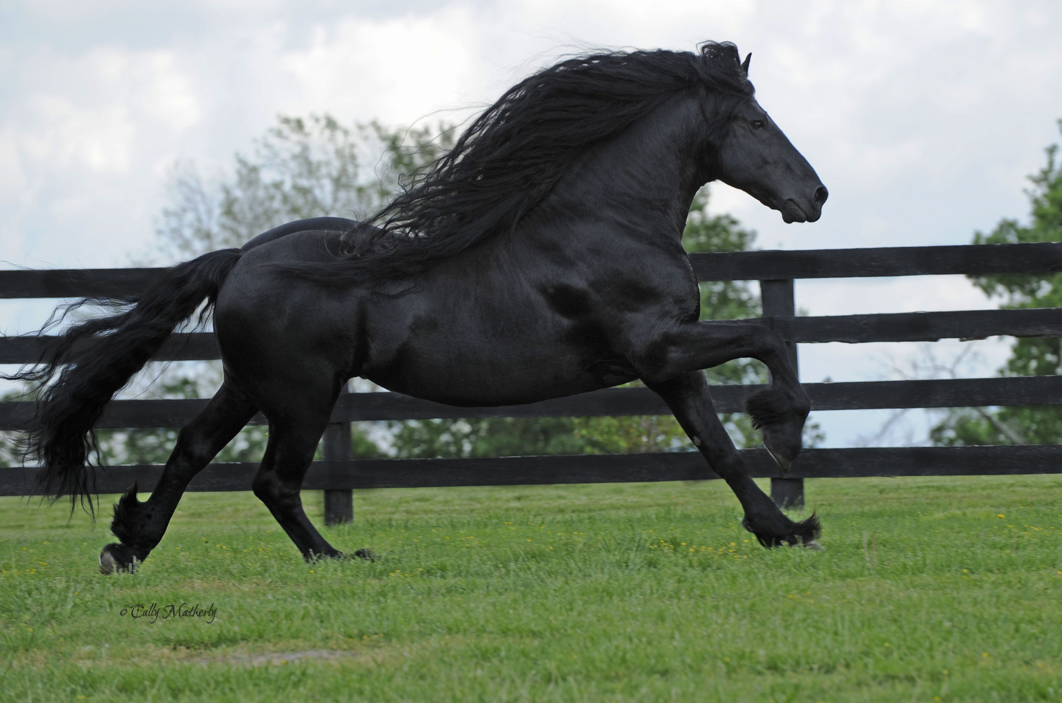 Frederik The Great Horse Beautiful Horse Coming To New York City For Rolex Central Park Horse Show