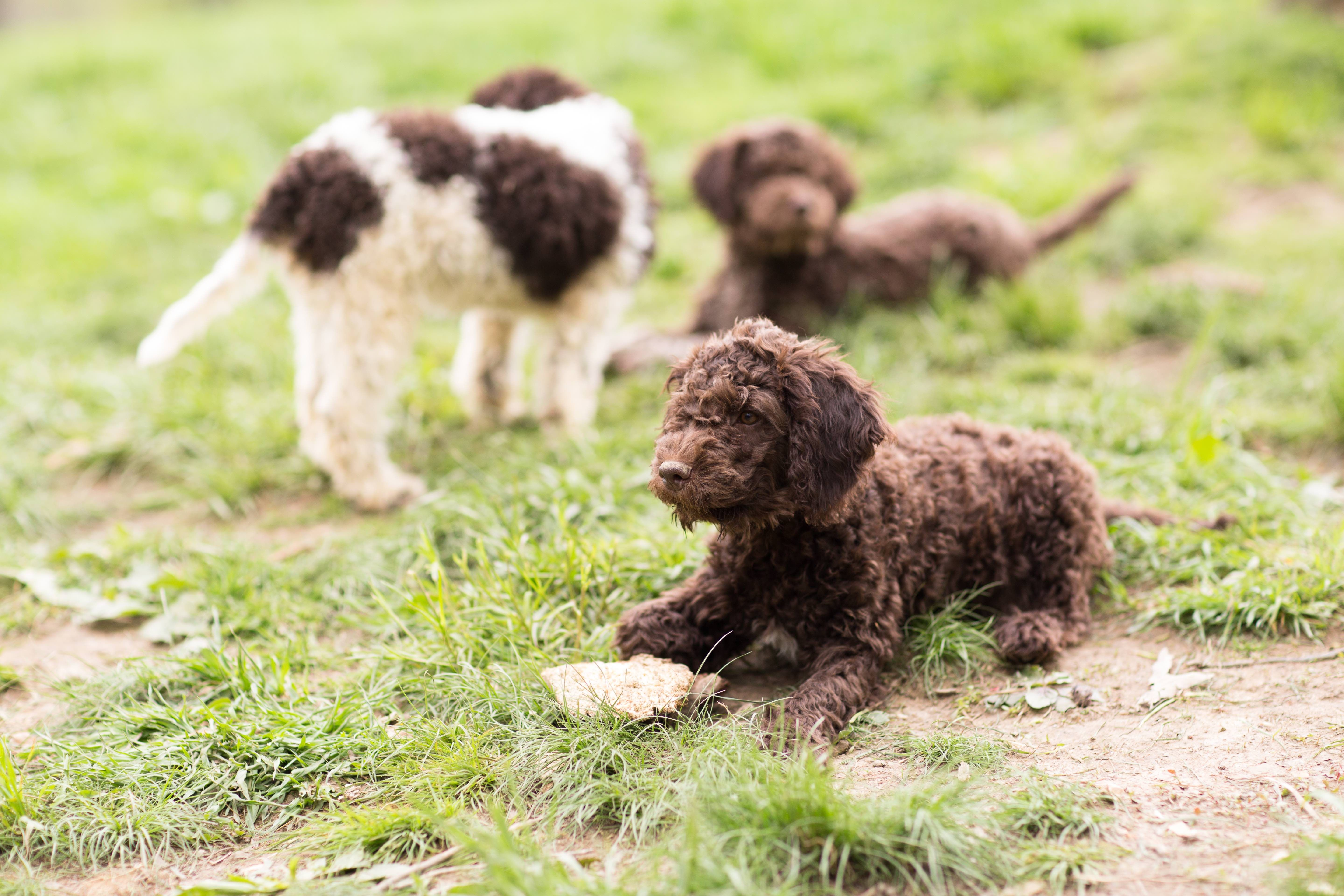 Best Dog Breeders - Best Places To Buy Dogs And Puppies