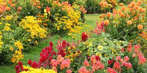 Plant, Flower, Garden, Plant community, Shrub, Petal, Groundcover, Botany, Annual plant, Botanical garden,