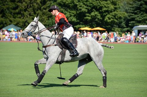 Footwear, Human, Halter, Shoe, Bridle, Horse, Horse supplies, Horse tack, Rein, Equestrian sport,