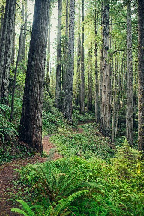 Vegetation, Nature, Green, Natural environment, Natural landscape, Plant community, Tree, Forest, Leaf, Old-growth forest,