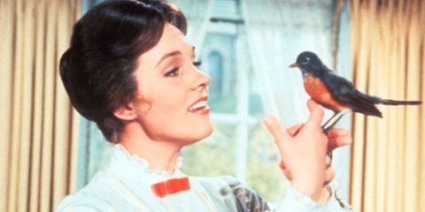Bird, Beak, Sharing, Neck, Black hair, Nail, Pet supply, Perching bird, Bird food, Bird supply,