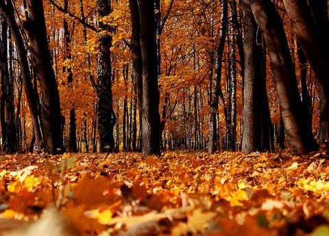 Deciduous, Nature, Wood, Natural landscape, Natural environment, Orange, Leaf, Autumn, Landscape, Sunlight,