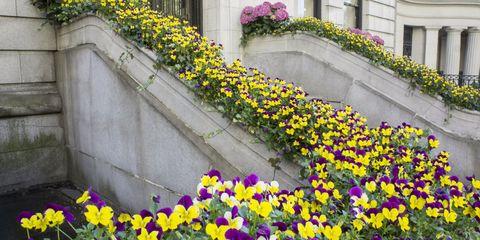 New York City Sidewalk Garden
