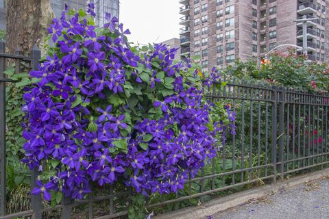 Blue, Plant, Purple, Violet, Flower, Lavender, Shrub, Electric blue, Tower block, Flowering plant,