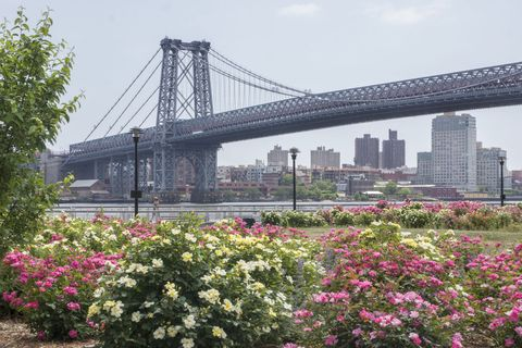 Sky, Bridge, Flower, Suspension bridge, Shrub, Metropolitan area, Urban area, Pink, Tower block, Girder bridge,