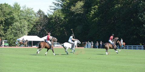 Ball game, Sports gear, Halter, Bridle, Stick and Ball Sports, Horse, Horse supplies, Horse tack, Team sport, Uniform,