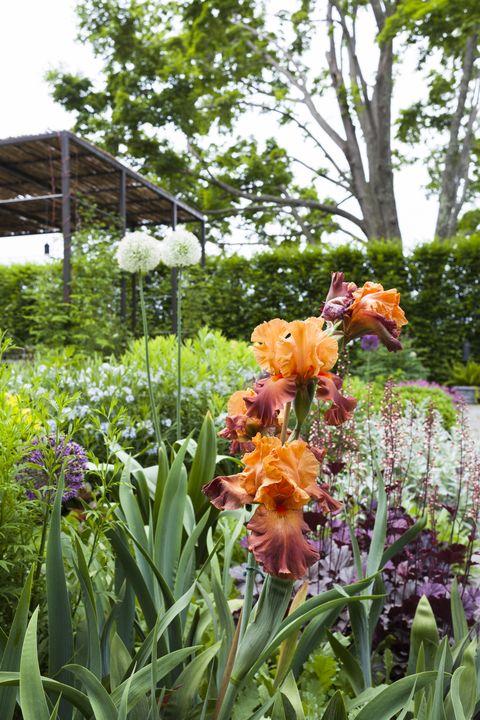 Plant, Petal, Flower, Garden, Flowering plant, Botany, Terrestrial plant, Shrub, Spring, Plant stem,