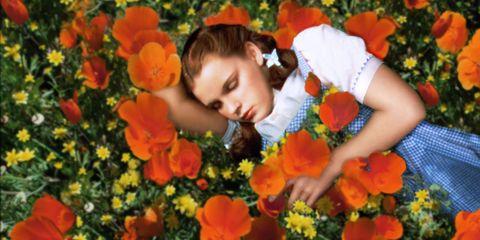 Petal, Plant, Flower, Orange, People in nature, Flowering plant, Poppy, Wildflower, Eschscholzia californica, Spring,