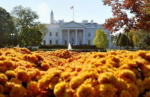 Yellow, Flower, Shrub, Flag, Petal, Garden, Landmark, Botany, Government, Annual plant,