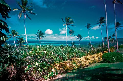 Nature, Vegetation, Landscape, Natural landscape, Arecales, Woody plant, Tropics, Ocean, Caribbean, Beach,