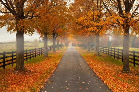 Deciduous, Nature, Natural landscape, Leaf, Autumn, Orange, Amber, Atmospheric phenomenon, Woody plant, Sunlight,