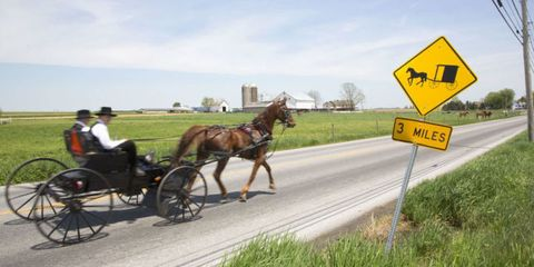 Bridle, Road, Horse, Carriage, Vertebrate, Horse supplies, Working animal, Rein, Traffic sign, Halter,