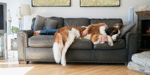 Woman cuddling St. Bernard dog on couch