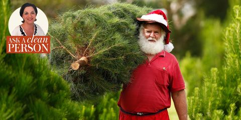 Tree, Plant, Conifer, Facial hair, Pine family, Fir, Beard, Christmas, Pine,