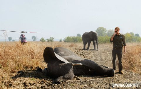 working animal, wildlife, african elephant, elephant, safari, landscape, elephants and mammoths, soil, pack animal, vehicle,