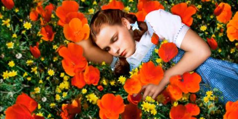 Petal, Plant, Flower, Orange, People in nature, T-shirt, Flowering plant, Wildflower, Coquelicot, Annual plant,