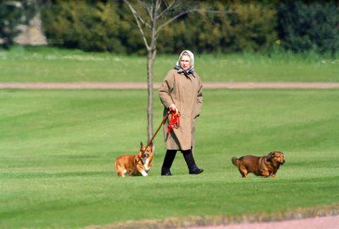 Human, Dog breed, Carnivore, Dog, Vertebrate, Mammal, Sporting Group, Liver, Animal training, Companion dog,