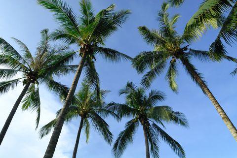 Vegetation, Nature, Blue, Sky, Daytime, Tree, Arecales, Summer, Sunlight, Woody plant,