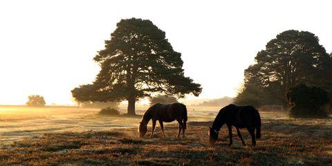 Grazing, Natural landscape, Pasture, Horse, Landscape, Mammal, Plain, Field, Rural area, Terrestrial animal,