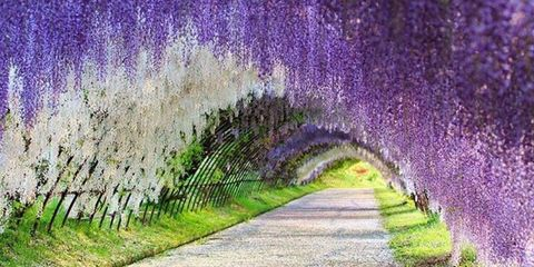 Infrastructure, Purple, Violet, Lavender, Arch, Trail, Grass family, Groundcover, Paint, Walkway,