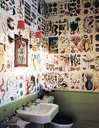 Decorator Steven Gambrel transformed the powder room of his 1810 Sag Harbor, New York, house into a fantasy of flora and fauna, covering the walls with pages from a reissue of Cabinet of Natural Curiosities, a compilation of elaborate engravings commissioned by the 18th-century Dutch naturalist Albertus Seba.
