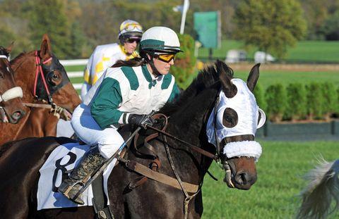 Halter, Bridle, Jockey, Rein, Vertebrate, Horse, Horse supplies, Horse tack, Helmet, Equestrian helmet,
