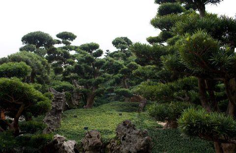 The landscape at the Buddhist Nan Lian Garden, home to a vegetarian restaurant.