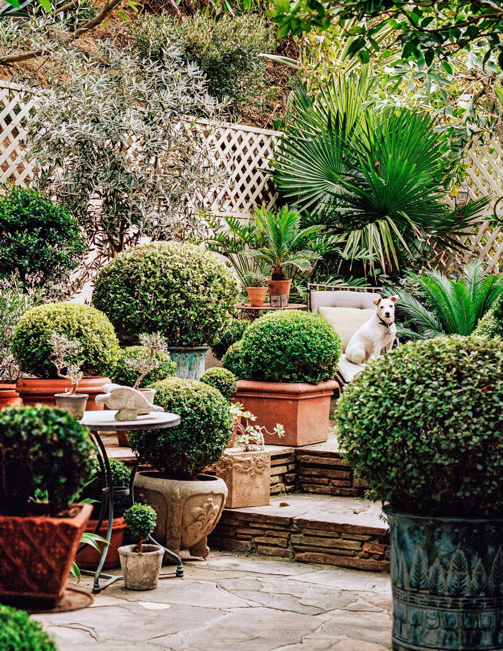 Topiary Garden of Designer Madeline Stuart